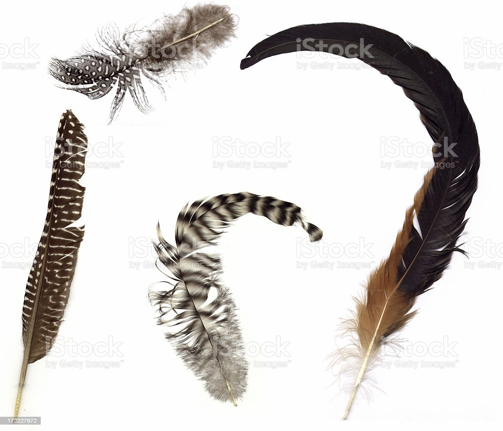 Four Feathers - Design Elements royalty-free stock photo