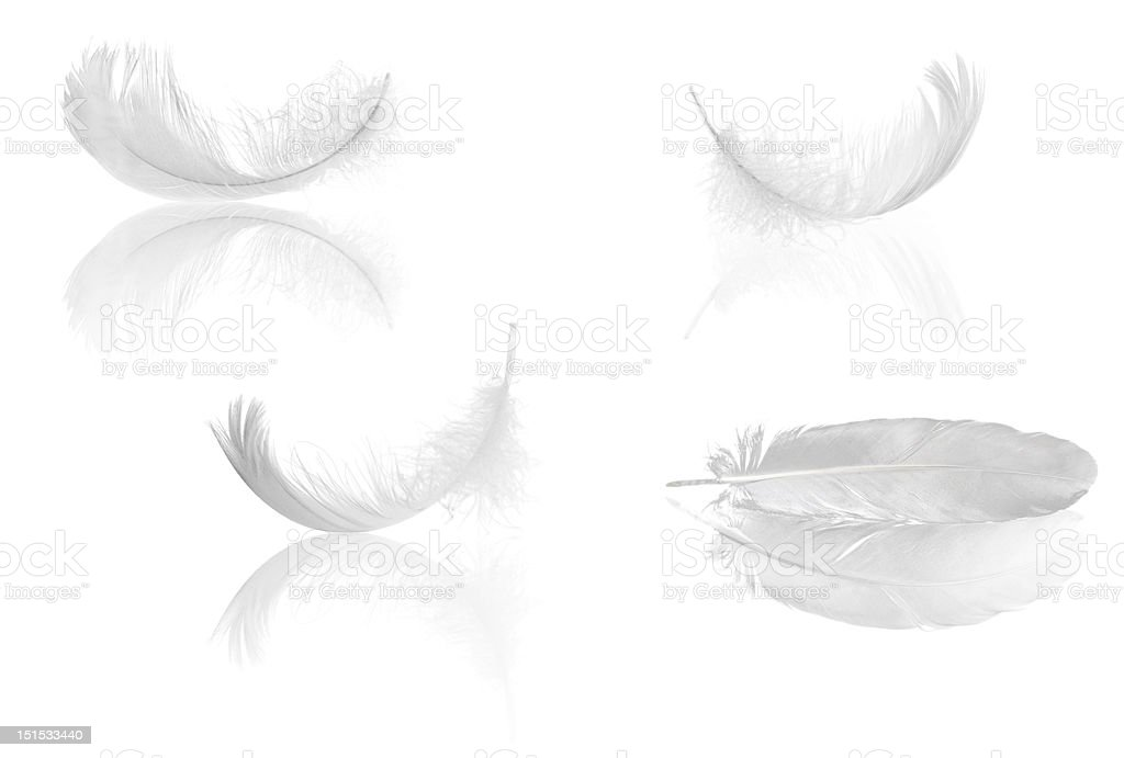 four feathers with reflections stock photo