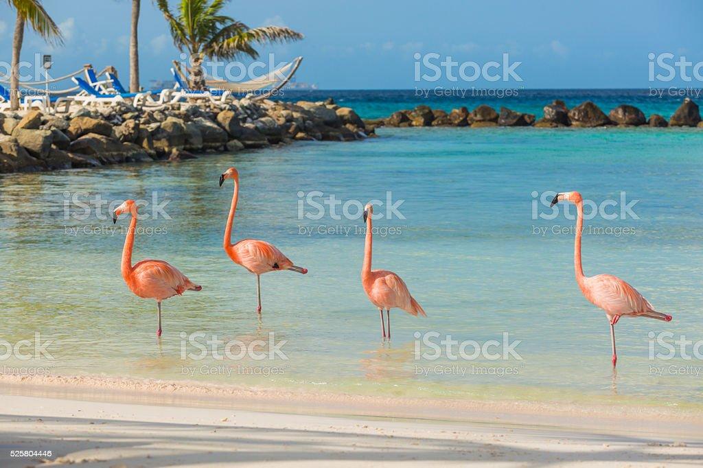 Cztery Flamingi na plaży – zdjęcie