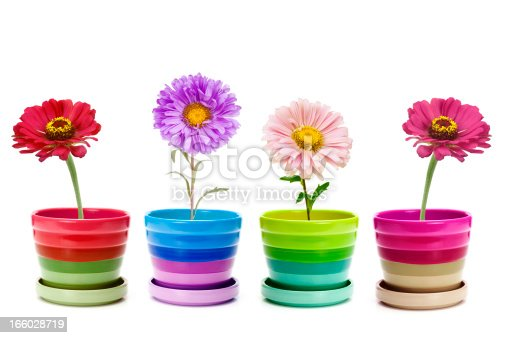 four flowers in ceramic pots isolated on white