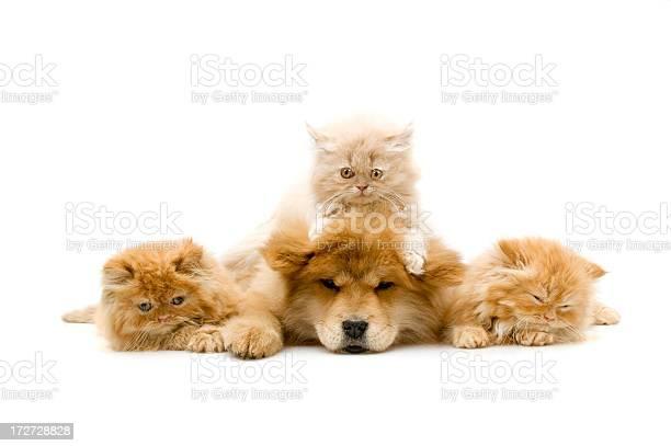 Four friends picture id172728828?b=1&k=6&m=172728828&s=612x612&h=umj3pcn3g2pvdlpppmhhvwjkb0gpr2ovrxdaj8dqow4=