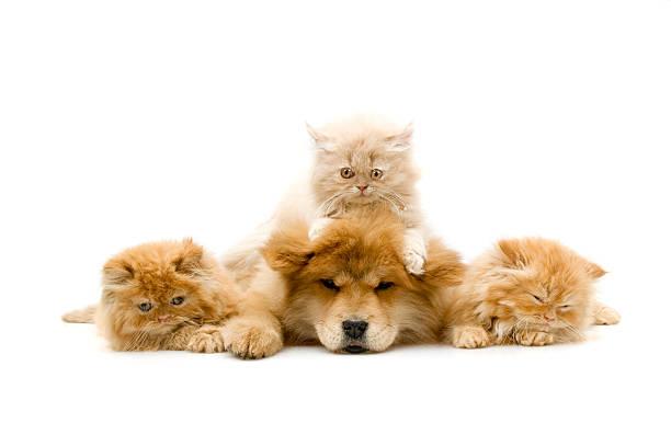 Four friends picture id172728828?b=1&k=6&m=172728828&s=612x612&w=0&h=euitqjkin05rpeosk1qzm jqs67cl ighwgun4wbofa=