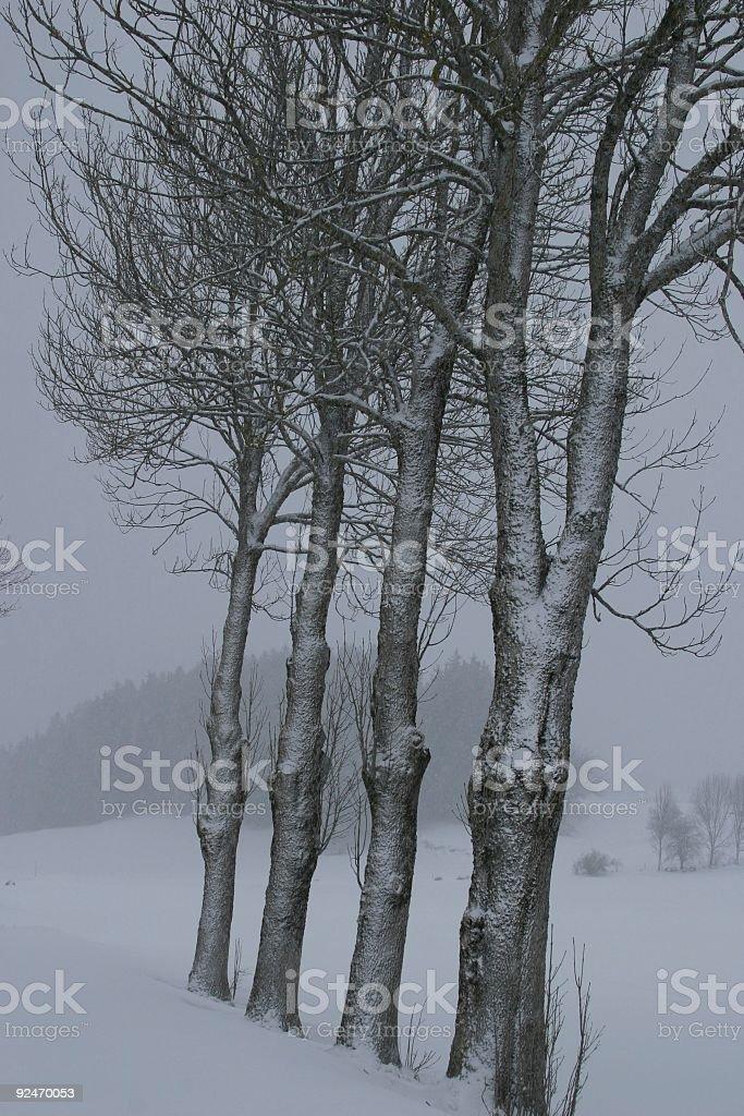 four frozen trees royalty-free stock photo
