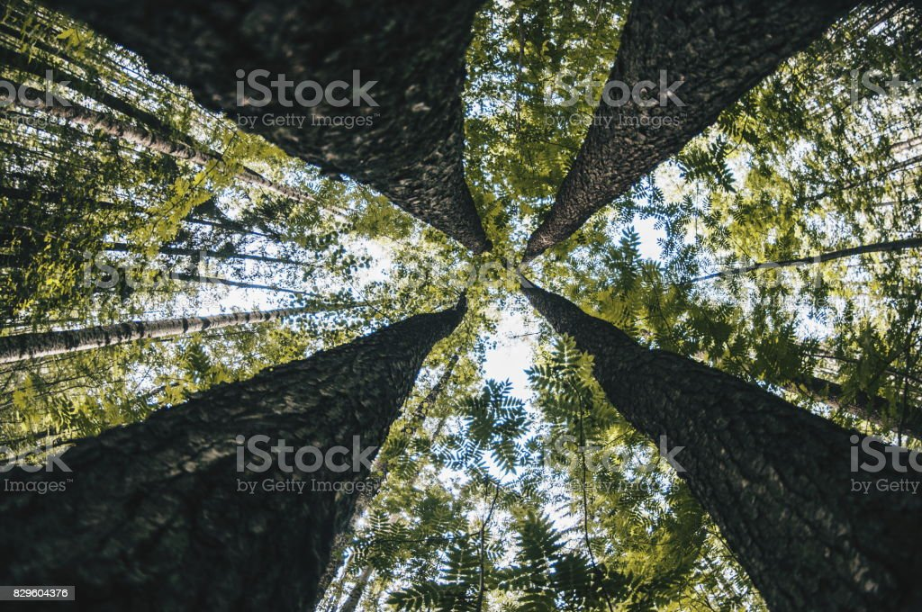 Four giants stock photo