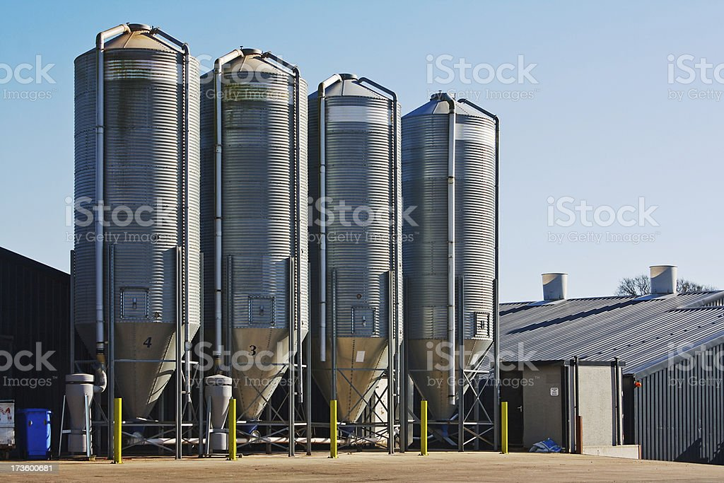 Four grain storage silos surrounded by buildings stock photo