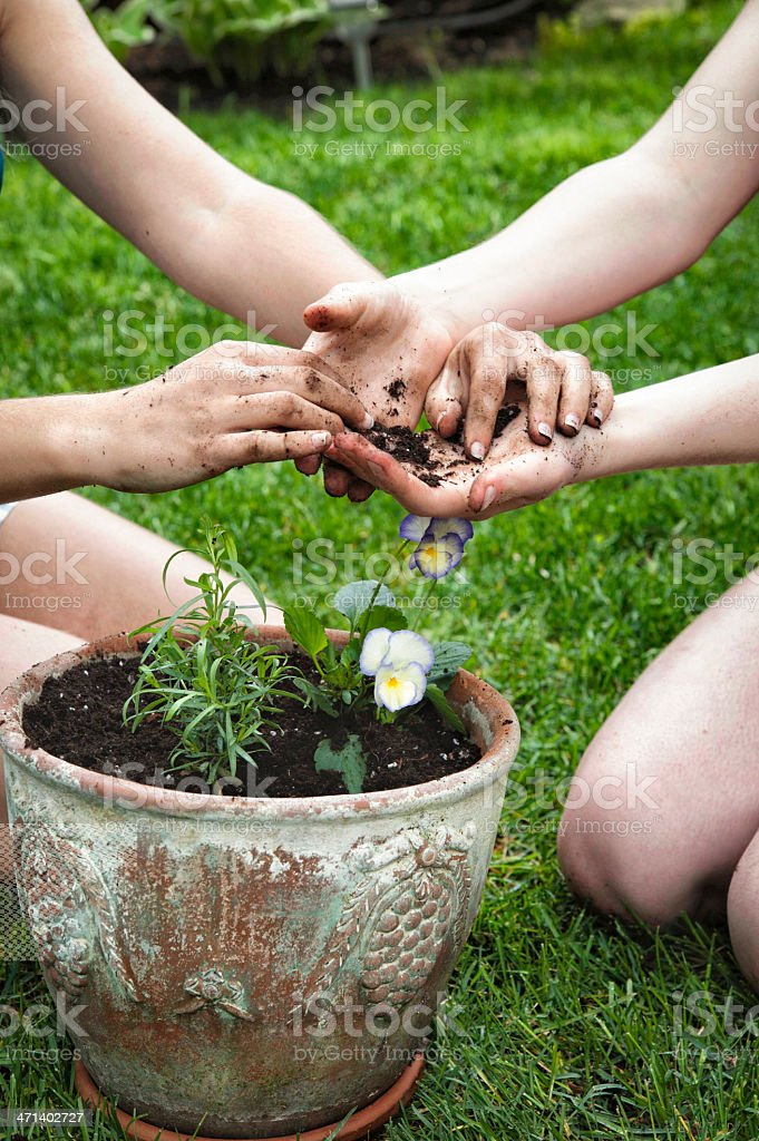 Four hands over freshly planted flowers and tarragon. royalty-free stock photo
