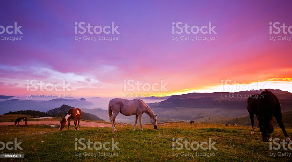 Four horses grazing on the grass at sunrise stock photo