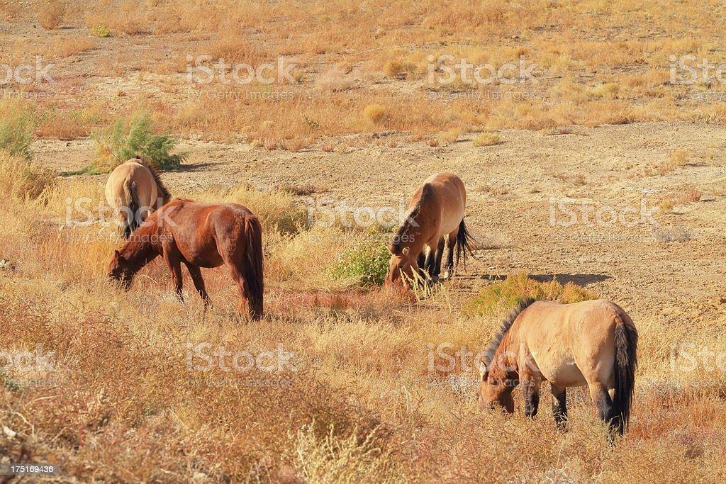 Four horses royalty-free stock photo