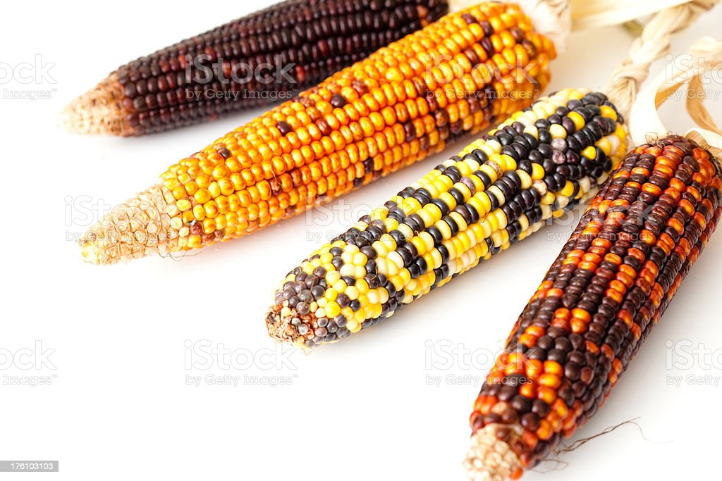 Four indian corn cobs royalty-free stock photo