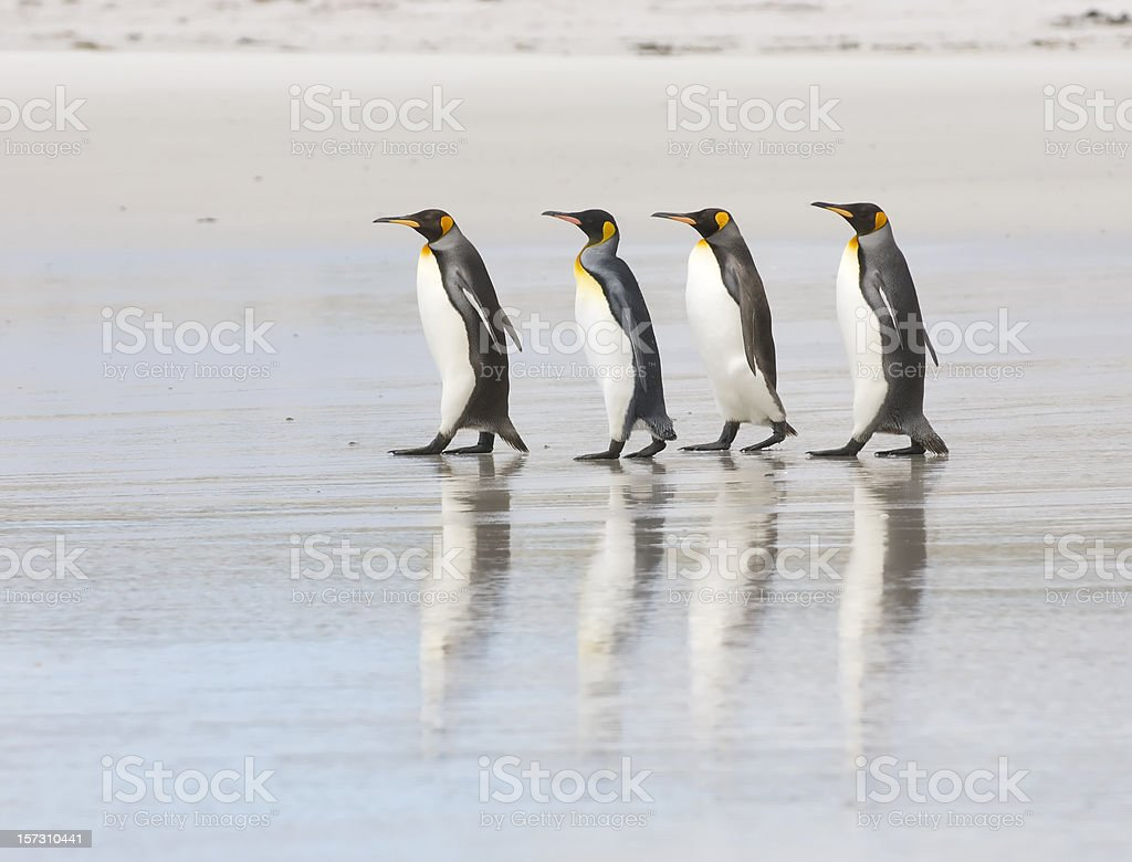 Four King Penguins on a beach stock photo