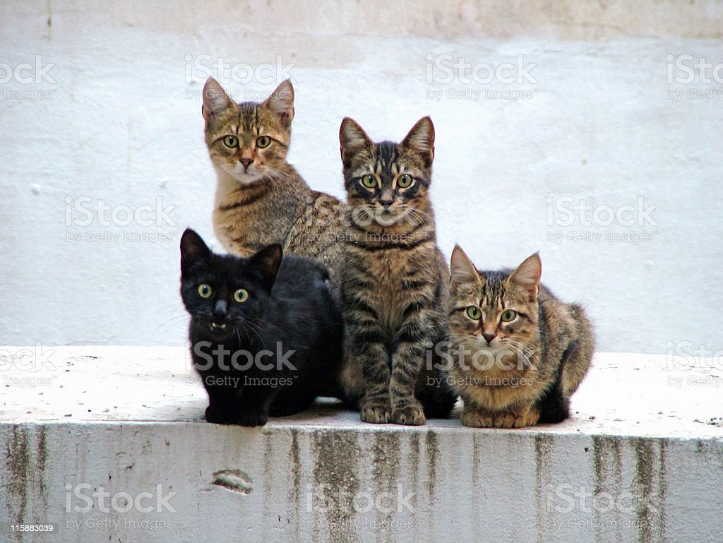 Four kittens posing stock photo