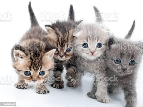 Four kittens walking together picture id162263035?b=1&k=6&m=162263035&s=612x612&h=nyyrtwydlj3wpbxcyjac8wgemj4w737lmuf6r8mgqlc=
