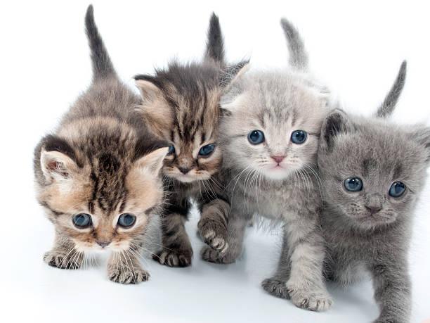 Four kittens walking together picture id162263035?b=1&k=6&m=162263035&s=612x612&w=0&h=ooauguortz7ehacqlb lj9qcnb16qxyje8pv2j3nbx8=
