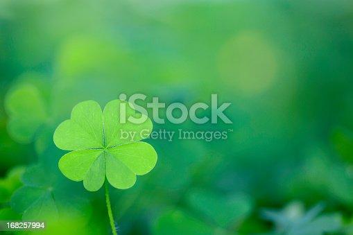 istock Four Leaf Clover Background Horizontal 168257994