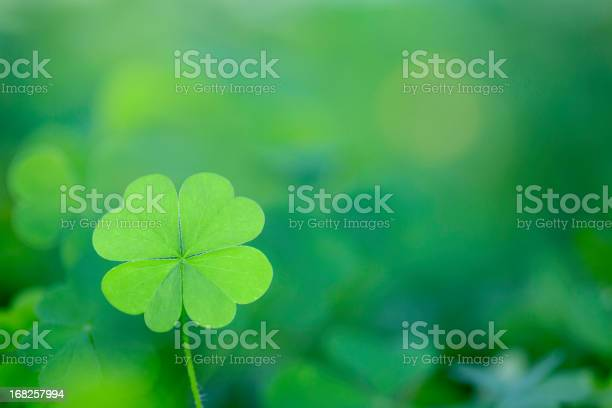 Four leaf clover background horizontal picture id168257994?b=1&k=6&m=168257994&s=612x612&h=hiflyh53bmdcap8imarmwcpznrqlkolqc6j6rmug  u=