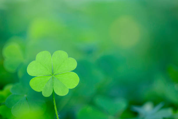four leaf clover background horizontal - klavertje vier stockfoto's en -beelden