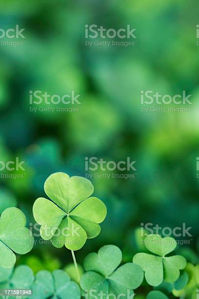 Four leaf clover background vertical picture id171591948?b=1&k=6&m=171591948&s=612x612&h=qqak ruo02 jj8tdrireh7twiz8lfft7r3hecghsry4=