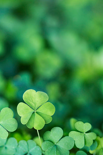 four leaf clover background vertical - klavertje vier stockfoto's en -beelden