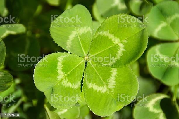 Four leaf clover good luck charm for aspiration search discovery picture id171205613?b=1&k=6&m=171205613&s=612x612&h=ndzygugsqksevn8enhkbhjnuru c7gbesqntg9iawng=