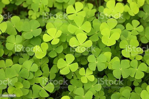 Four leaf clover green background picture id488539808?b=1&k=6&m=488539808&s=612x612&h=zpoxurqpnk4hy6vwhxy5qa2sfhlgyzr8jv01lfs0yjy=