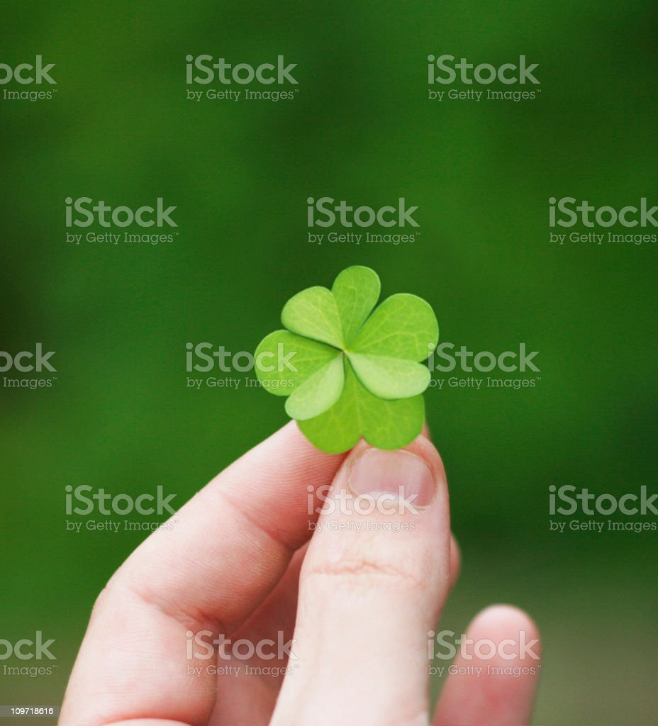 Four leaf clover held in a left hand stock photo