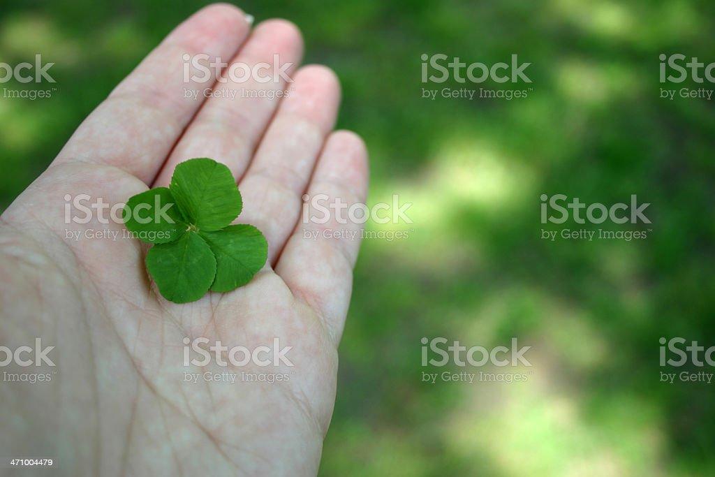 Four Leaf Clover II stock photo