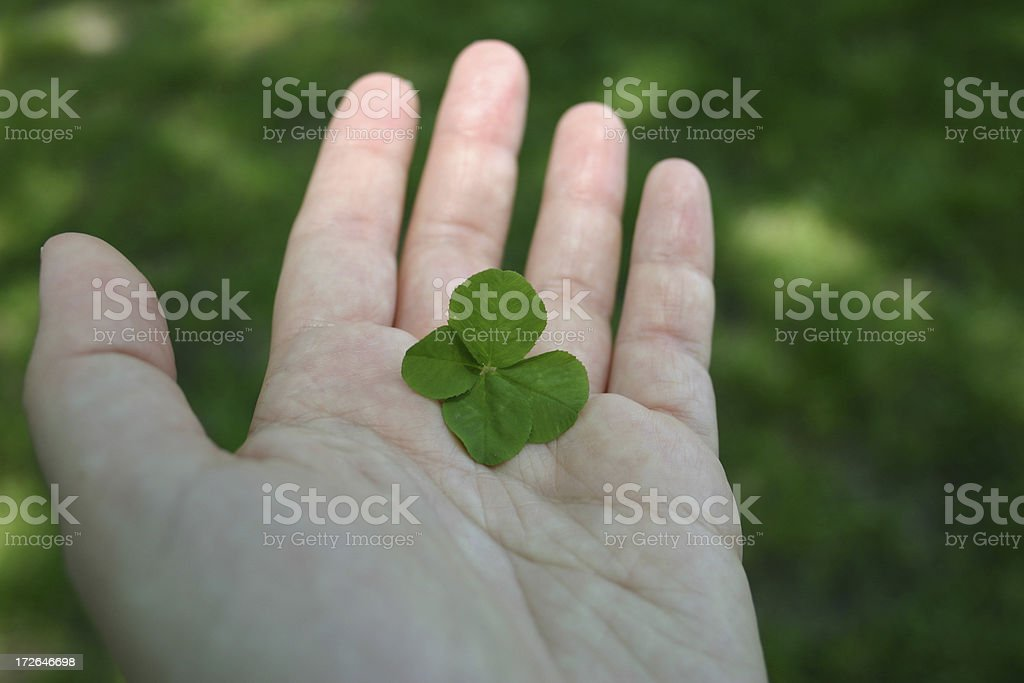 Four Leaf Clover III royalty-free stock photo