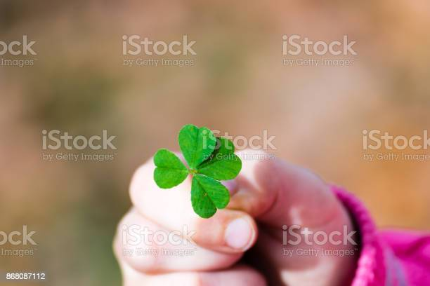 Four leaf clover in small hand of young girl picture id868087112?b=1&k=6&m=868087112&s=612x612&h=m pwvfxbxk6ui tlrdtsiltckm60hzh6zqgivpqn9bg=