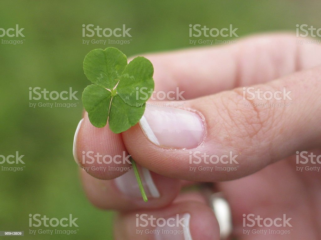 four leaf clover in woman hand royalty-free stock photo