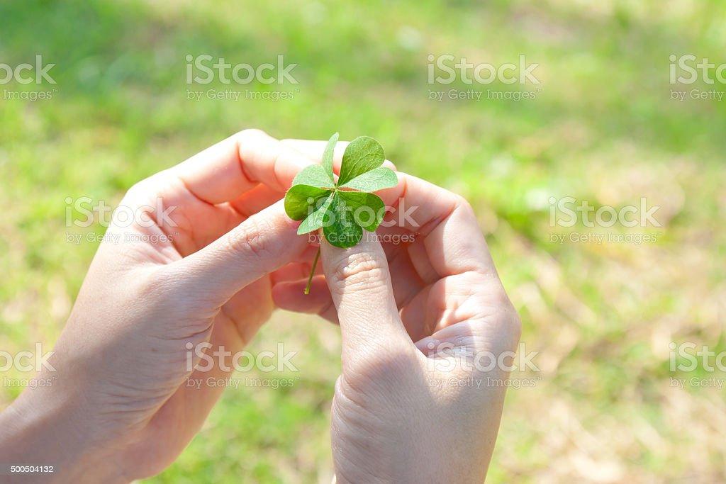 Four leaf clover , lucky leaf stock photo