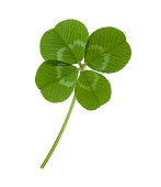 Four leaf clover  for luck