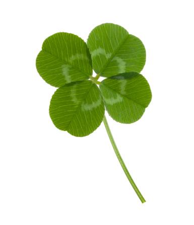 Four leaf clover for luck