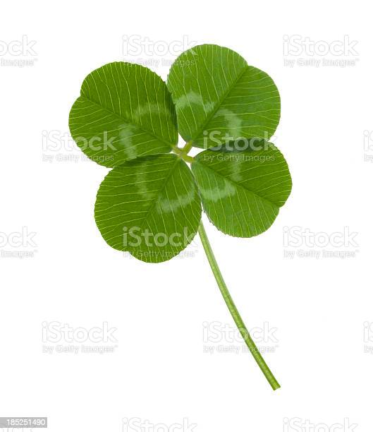 Four leaf clover on white background picture id185251490?b=1&k=6&m=185251490&s=612x612&h=j4zcpyoa3i6su13nbofqnk70ea1vcuorgiapgnsl ro=