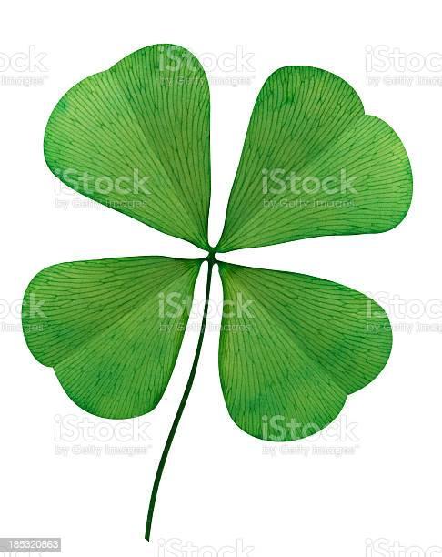 Four leaf clover on white background picture id185320863?b=1&k=6&m=185320863&s=612x612&h=ctyban2jgtfgkvsgfrc 4ihr nazm0n2txq9c8fzmoa=