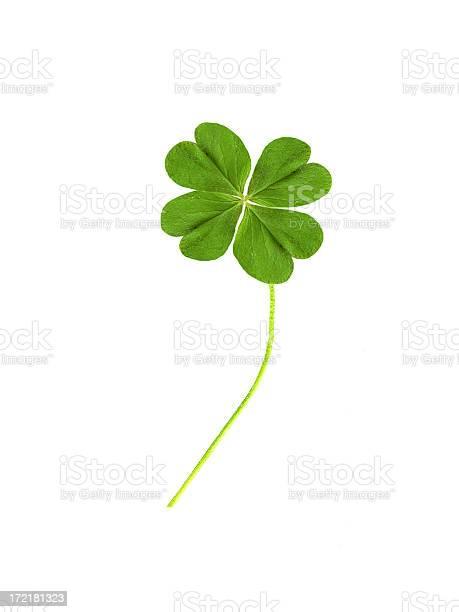 Four leaf clover picture id172181323?b=1&k=6&m=172181323&s=612x612&h=rcmdw7z4sbns1fbzhcyzmkrs3ssqrbsnx1sgz6kbv9g=