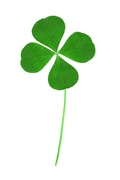 símbolo do trevo de quatro folhas - boa sorte - fotografias e filmes do acervo