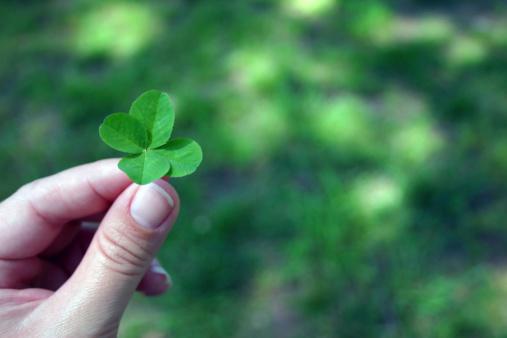 Woman's hand holding four-leaf clover. Focus on clover.