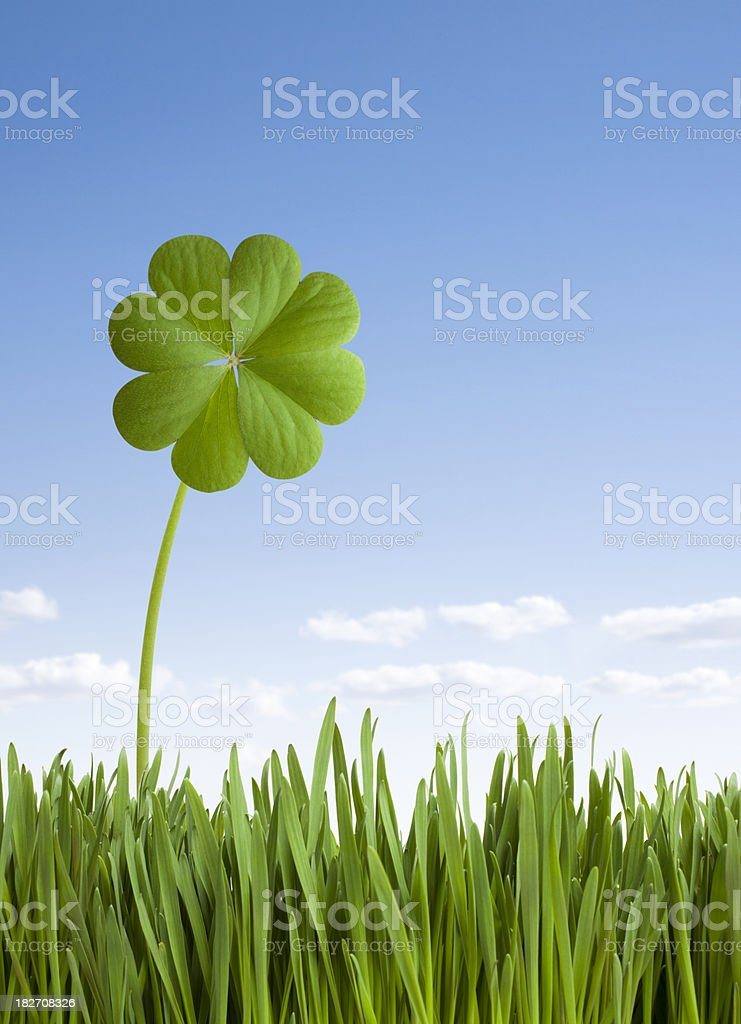 Four leaf clover. royalty-free stock photo