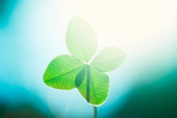 Four leaf clover picture id184102448?b=1&k=6&m=184102448&s=612x612&w=0&h=uxrvfgj ewhxet0iqk9exmpwbbccidi97x5pogpfnvk=