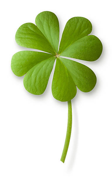 four leaf clover - luck of the irish stock photos and pictures