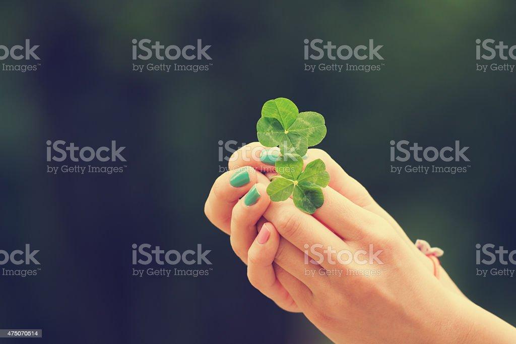 Four leaf clover stock photo