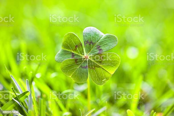 Four leaf clover picture id486957006?b=1&k=6&m=486957006&s=612x612&h=l62ybxszhvnarvgczf79mxzc4g2evlegpm0lyyt805c=