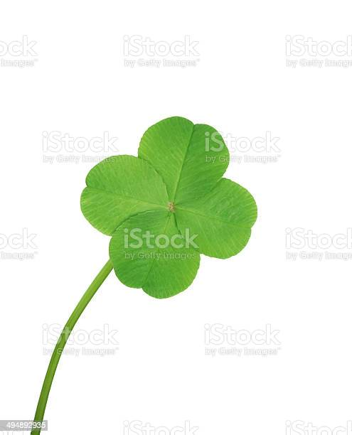 Four leaf clover picture id494892935?b=1&k=6&m=494892935&s=612x612&h=aur5uklnfyzogygqqtnupwvlyunagnvlcwnewwhp56g=