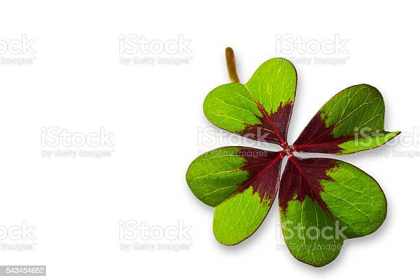 Four leaf clover picture id543454652?b=1&k=6&m=543454652&s=612x612&h=bwqk06yg6 dv6eougjn9ae8tunejbjw u bkgi8zpbq=