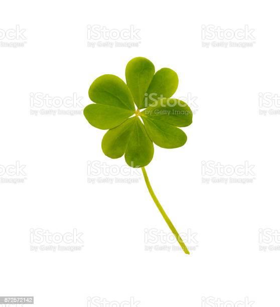 Four leaf clover picture id872572142?b=1&k=6&m=872572142&s=612x612&h=vcv8xaks1qki95hc6c0mj0asfwieks1y7tidz5xykj4=