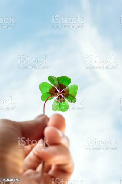 Four leaf lucky clover held by hand against sky picture id908006770?b=1&k=6&m=908006770&s=612x612&h=rbmtlzgfnanhfuxvnmnu9jnkr1y40s6fz0czchkuum4=