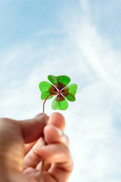 Four leaf lucky clover held by hand against sky stock photo