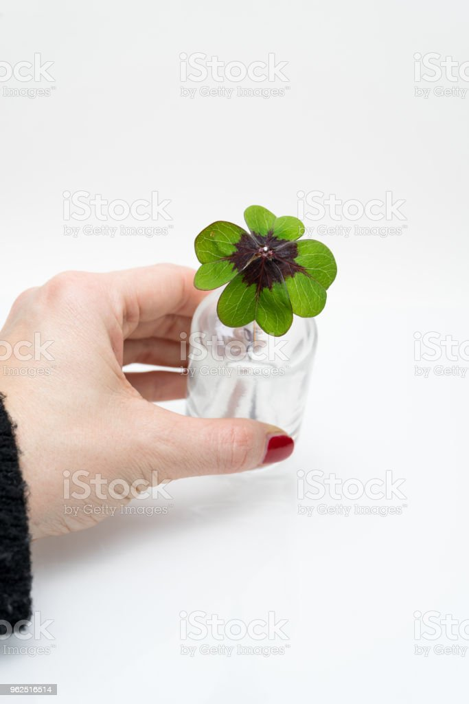 Four leave clover on white - Royalty-free Aspirations Stock Photo