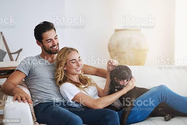 Four legged friends make a house a home picture id525025330?b=1&k=6&m=525025330&s=612x612&h=sedheqcvnrwwcqtipye4zjmtyv1pz5afdfglt unyoa=