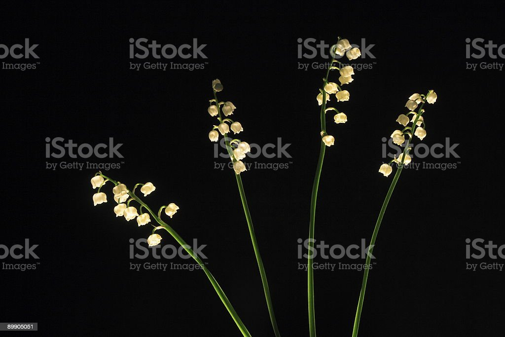 Four Lily of the valley. royalty free stockfoto